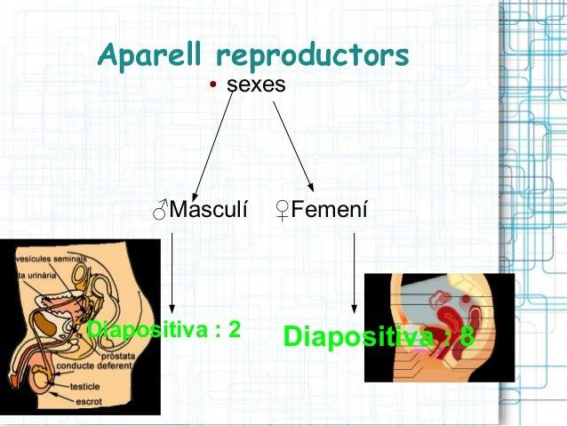 Aparell reproductors ●  sexes  ♂Masculí  Diapositiva : 2  ♀Femení  Diapositiva : 8