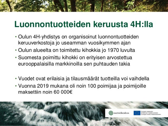 • Oulun 4H-yhdistys on organisoinut luonnontuotteiden keruuverkostoja jo useamman vuosikymmen ajan • Oulun alueelta on toi...