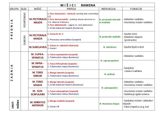 M I Š I C I RAMENA GRUPA SLOJ MIŠIĆ PRIPOJI INERVACIJA FUNKCIJE PREDNJA POVRŠINSKI M.PECTORALIS MAJOR 1. Pars clavicularis...