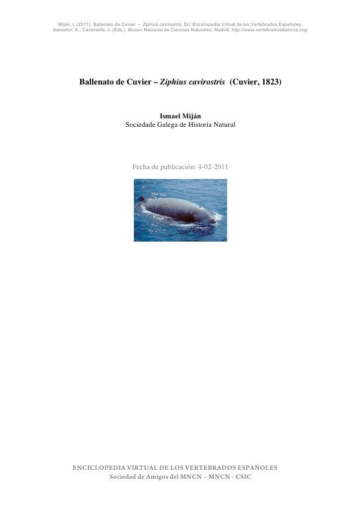 Miján, I. (2011). Ballenato de Cuvier – Ziphius cavirostris. En: Enciclopedia Virtual de los Vertebrados Españoles.Salvado...