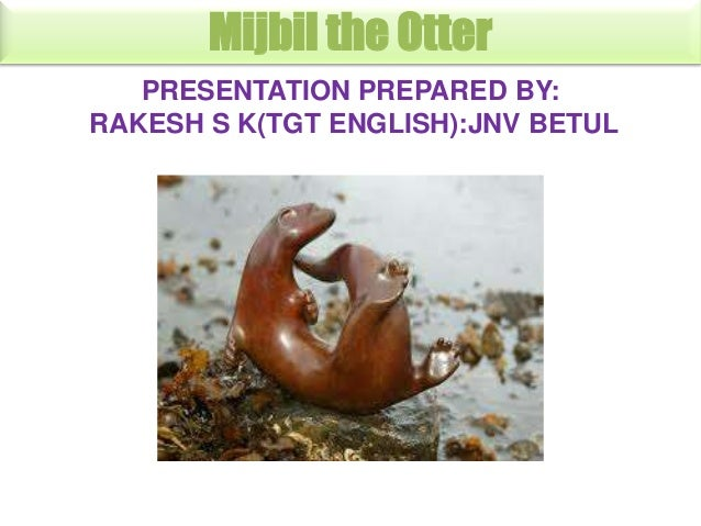 Mijbil the Otter PRESENTATION PREPARED BY: RAKESH S K(TGT ENGLISH):JNV BETUL
