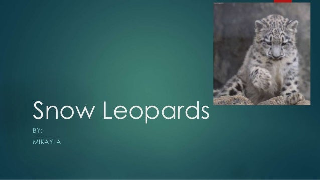 Snow Leopards BY: MIKAYLA