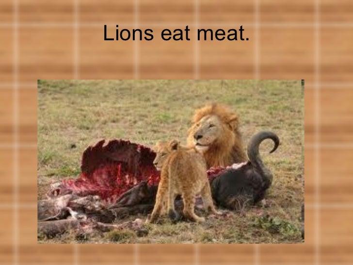 Lions eat meat.