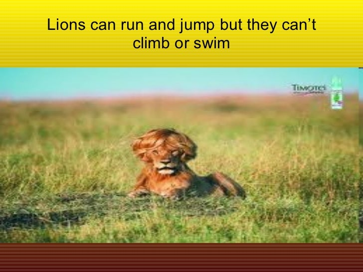 Lions can run and jump but they can't climb or swim