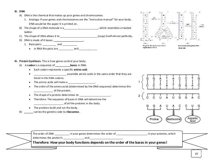 Biology - Regents Review Packet with Blanks