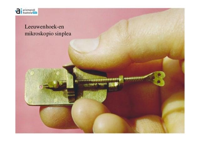 Leeuwenhoek-enmikroskopio sinplea