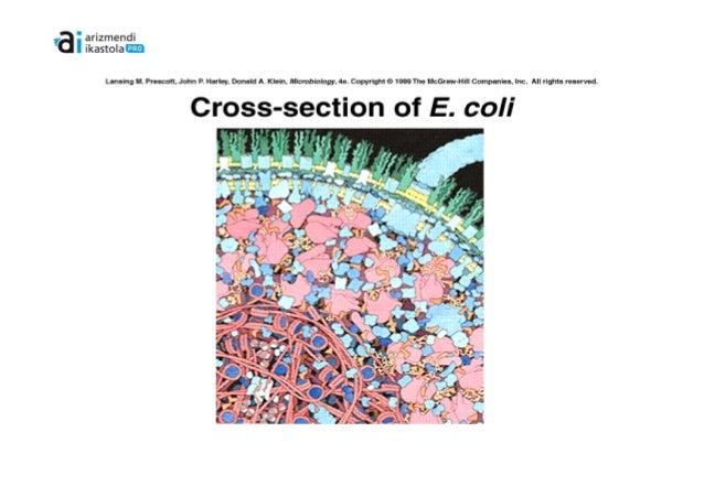 Mikroorganismoaen zitoplasma eta osaera Slide 3