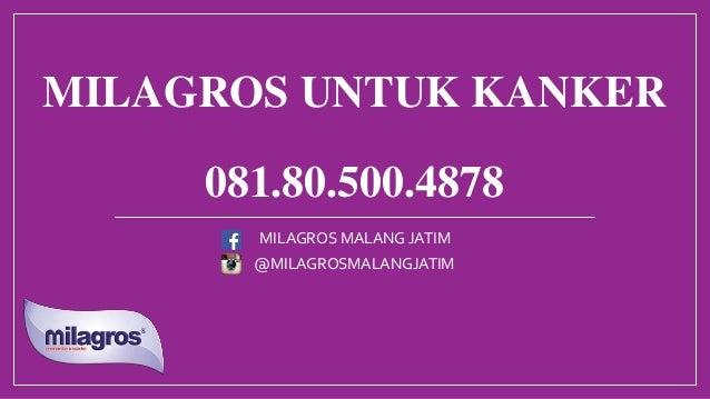 MILAGROS UNTUK KANKER 081.80.500.4878 @MILAGROSMALANGJATIM MILAGROS MALANG JATIM