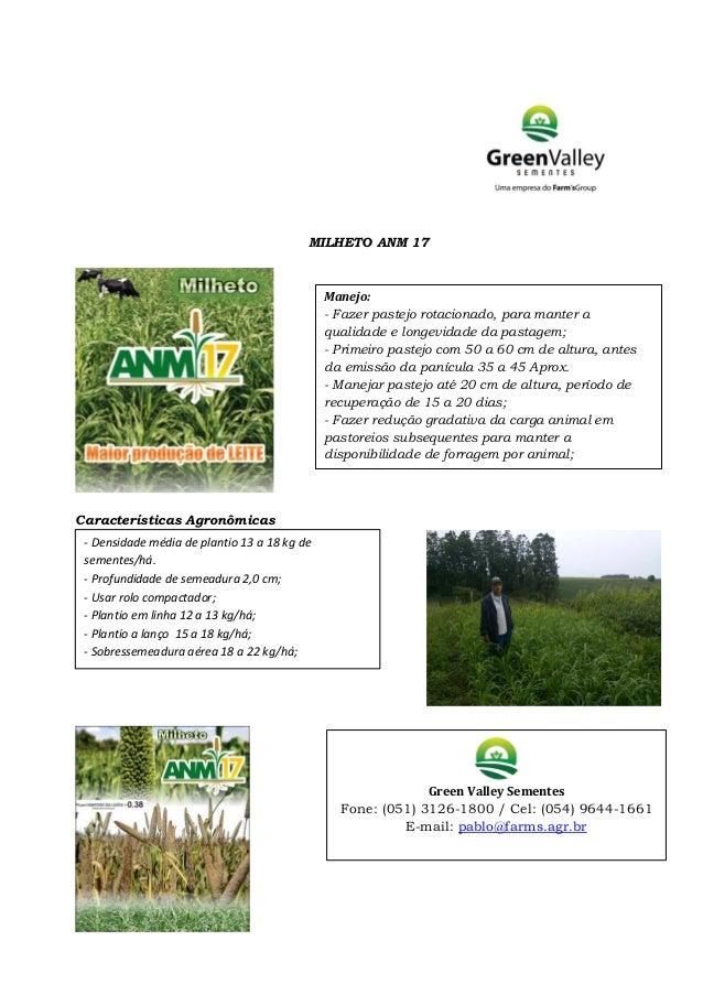 MILHETO ANM 17 Características Agronômicas Manejo: - Fazer pastejo rotacionado, para manter a qualidade e longevidade da p...