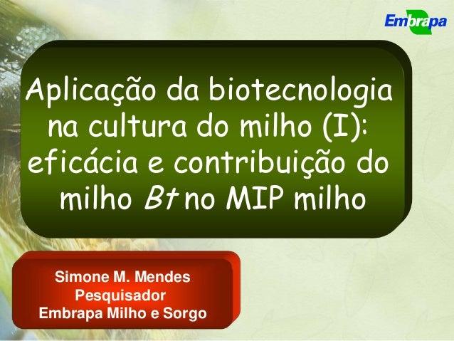 Aplicação da biotecnologia na cultura do milho (I):eficácia e contribuição do  milho Bt no MIP milho  Simone M. Mendes    ...