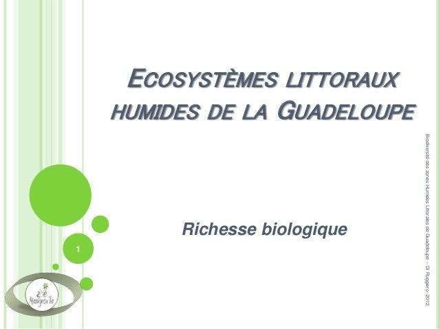 ECOSYSTÈMES LITTORAUX HUMIDES DE LA GUADELOUPE Richesse biologique 1 BiodiversitédeszonesHumidesLittoralesdeGuadeloupe--Di...