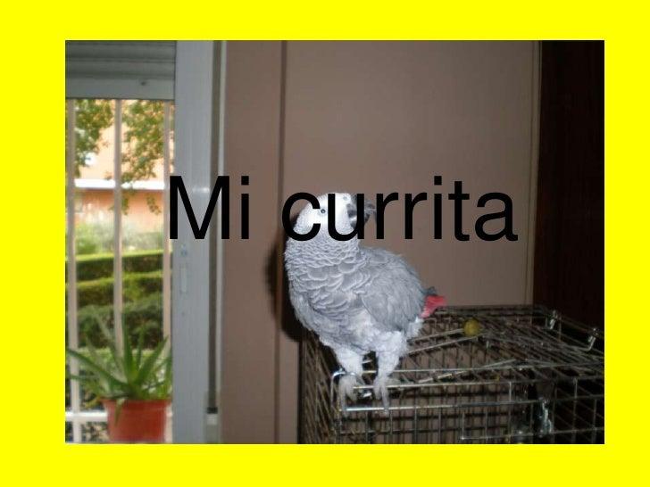 Mi currita<br />