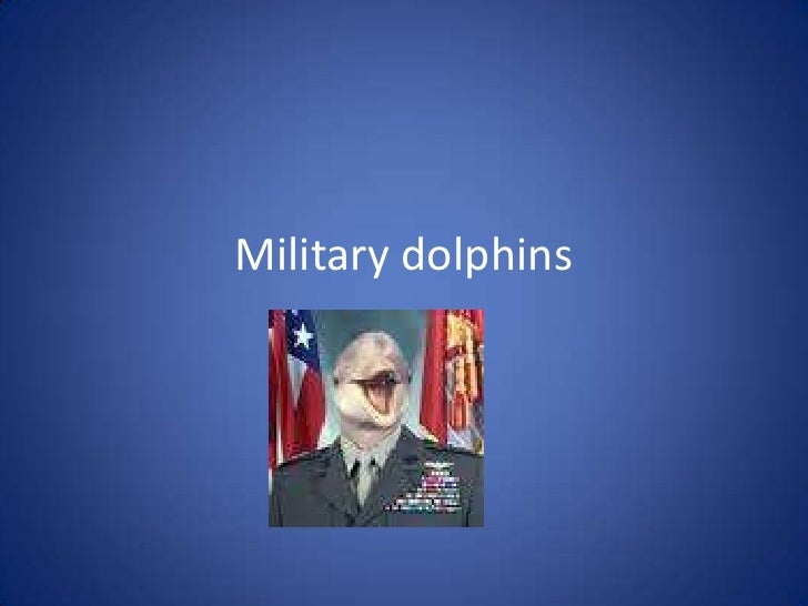 Military dolphins <br />