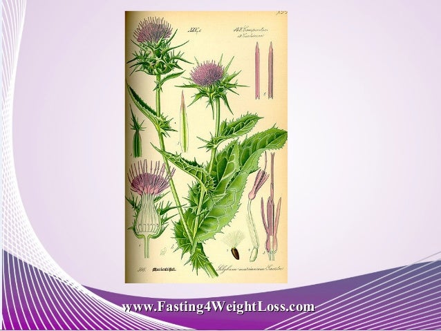 Detox Your Liver and Lose Weight | Milk Thistle Benefits