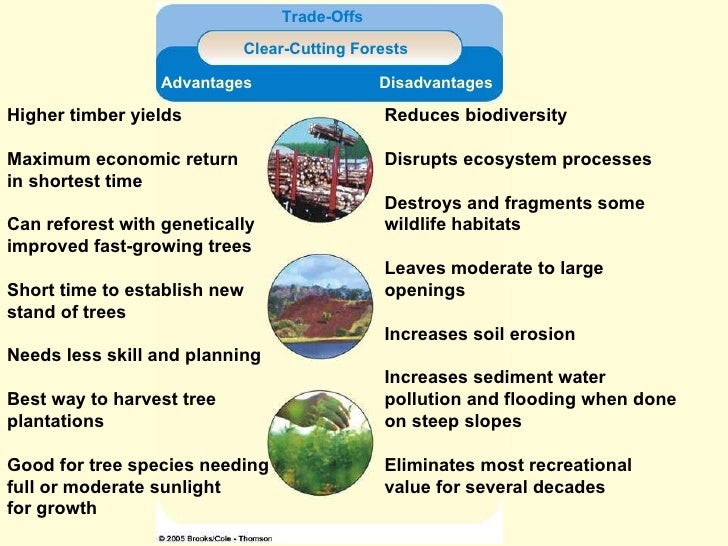 advantages and also problems in reforestation