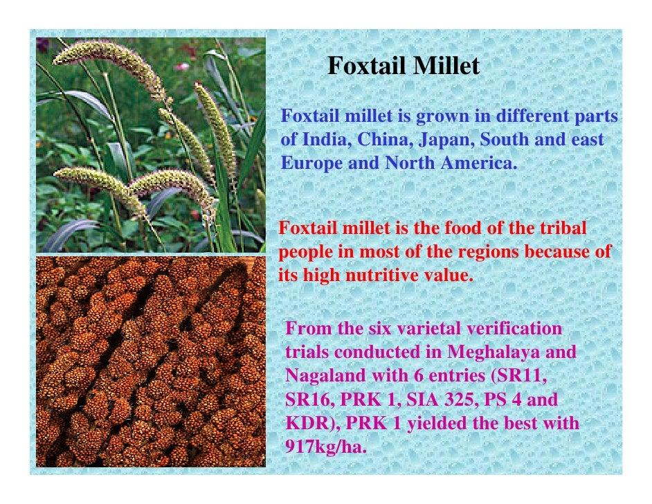 Foxtail Millet ...