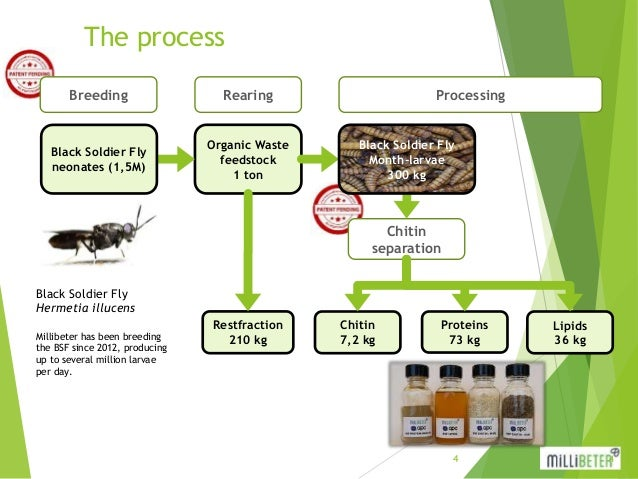Insect Bioconversion - Nouchka De Craene, Millibeter