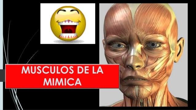 MUSCULOS DE LA MIMICA