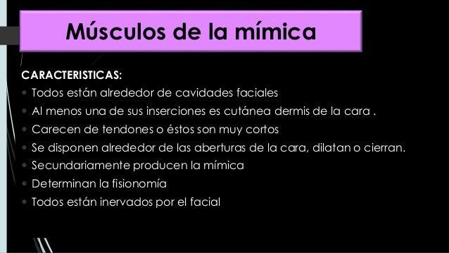 MÚSCULOS FACIALES  Slide 2