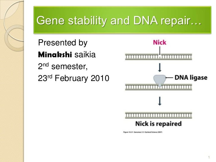 Gene stability and DNA repair…<br />Presented by <br />Minakshisaikia<br />2nd semester, <br />23rdFebruary 2010<br />1<br />