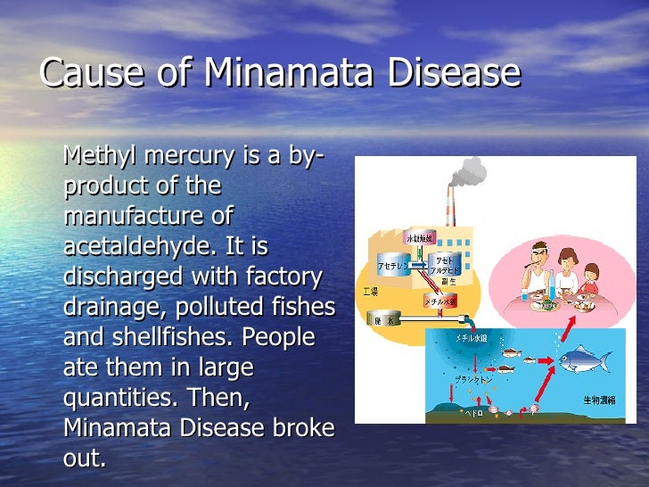 whats minimata disease Minamata disease definition: mercury poisoning from industrially contaminated water and fish, often resulting in severe neurological disorders or deathorigin of minamata diseaseafter minamata, japanese fishing village where first diagnosed.