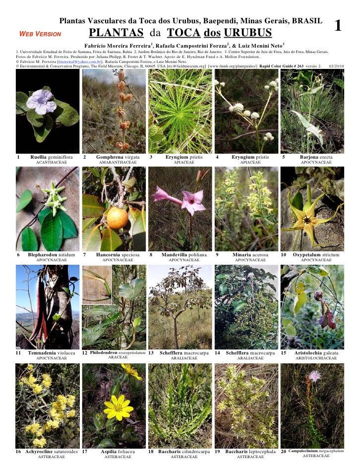 Plantas Vasculares da Toca dos Urubus, Baependi, Minas Gerais, BRASIL WEB VERSION                                PLANTAS d...