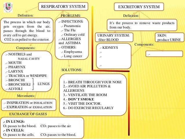 Mindmap. RESPIRATORY & EXCRETORY SYSTEM