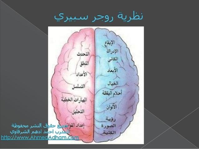 Mind Maps - الخرائط الذهنية