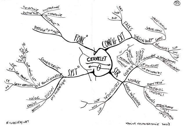 Mind maps cartes mentales mappe mentali : cervelet diencephale hypophyse cerveau