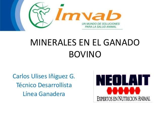 MINERALES EN EL GANADO BOVINO Carlos Ulises Iñiguez G. Técnico Desarrollista Línea Ganadera
