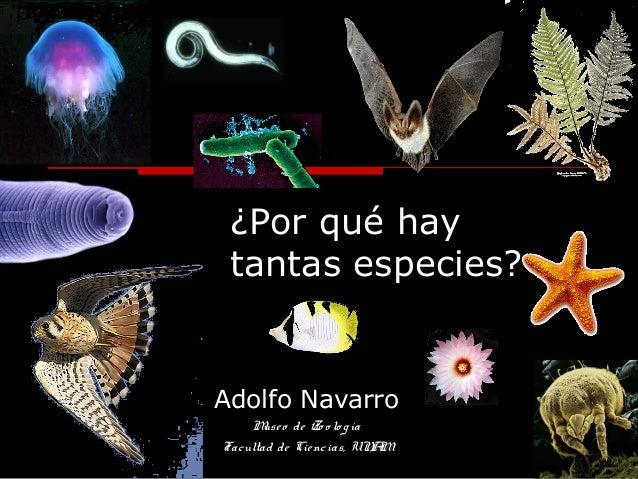 ¿Por qué hay tantas especies? Adolfo Navarro Museo de Zo o lo gía Facultad de Ciencias, UNAM