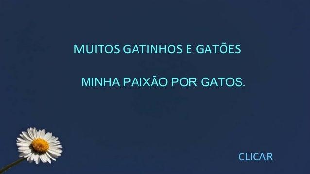 MUITOS GATINHOS E GATÕES CLICAR MINHA PAIXÃO POR GATOS.