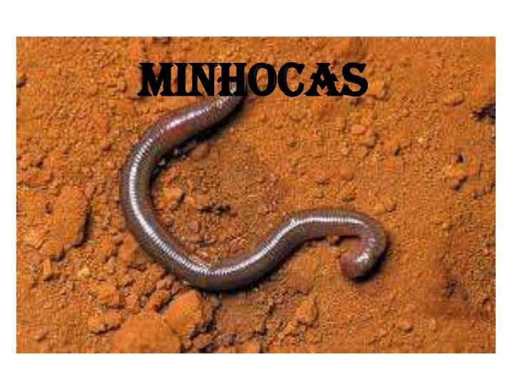 MINHOCAS<br />