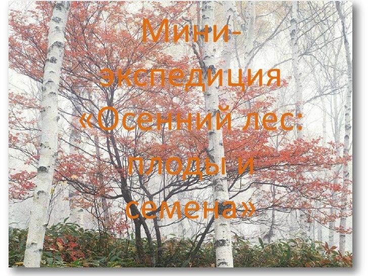 Мини-экспедиция<br />«Осенний лес: плоды исемена»<br />