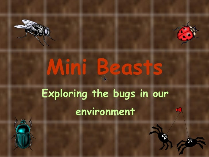 Mini Beasts Exploring the bugs in our   environment