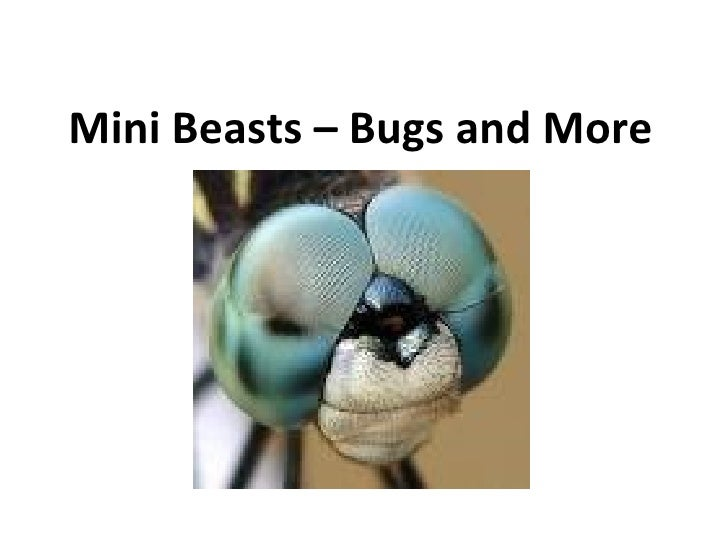 Mini Beasts – Bugs and More