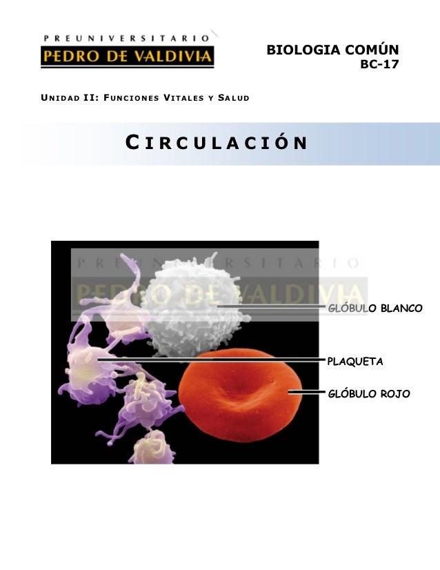 BIOLOGIA COMÚN                                                     BC-17UNIDAD II: FUNCIONES VITALES   Y   SALUD          ...