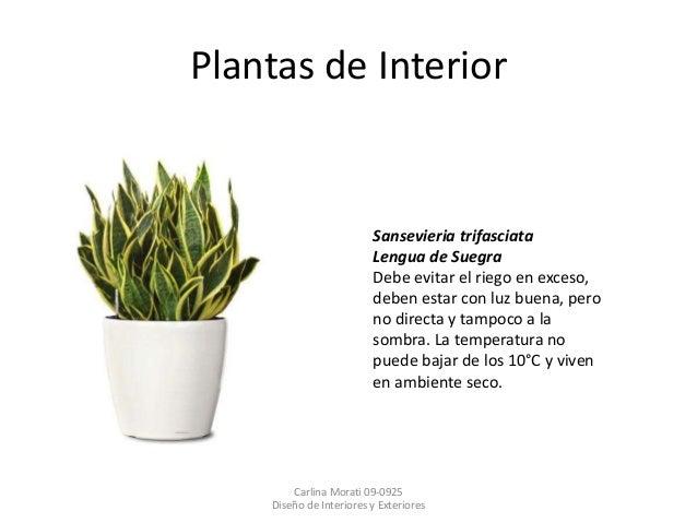 Minimalismo for Plantas de interior lengua de gato