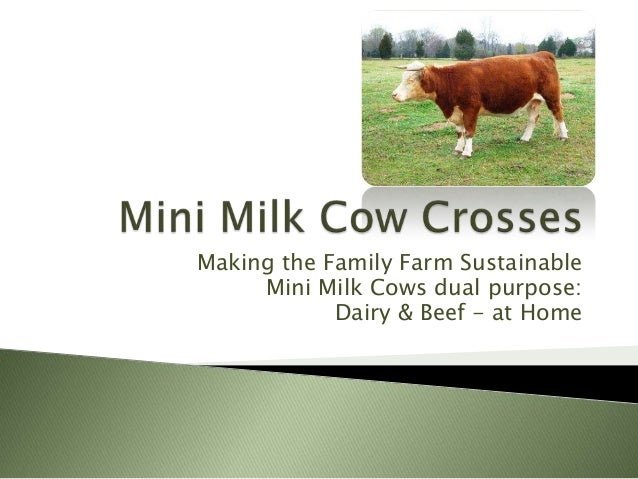 Making the Family Farm SustainableMini Milk Cows dual purpose:Dairy & Beef - at Home