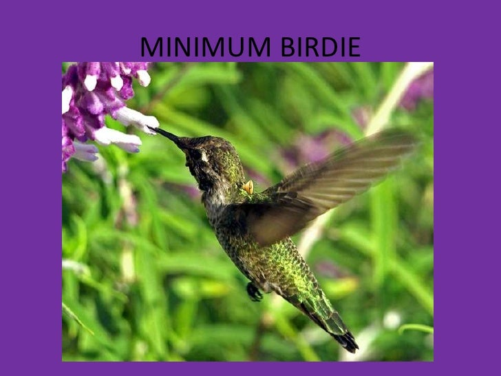 MINIMUM BIRDIE<br />