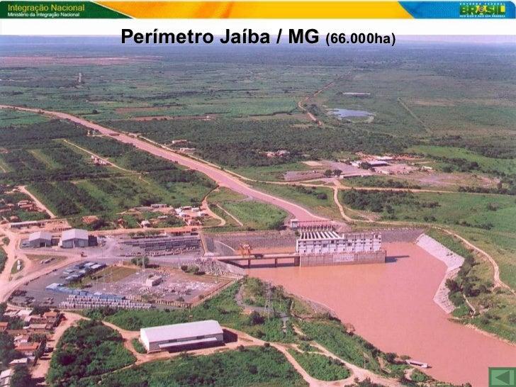 Resultado de imagem para Jaíba irrigação