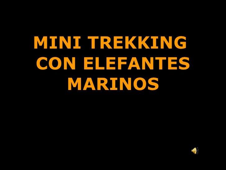 MINI TREKKING  CON ELEFANTES MARINOS Caminata costera de medio día Punta Ninfas