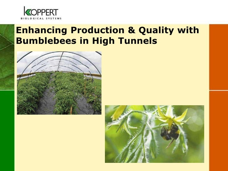 Enhancing Production & Quality withBumblebees in High Tunnels