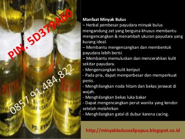 minyak bulus pengencang payudara minyak bulus pembesar payudara asli