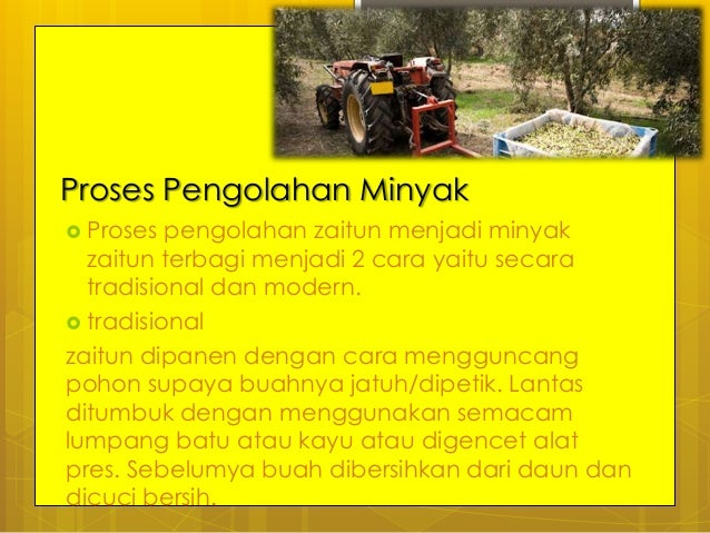 Minyak zaitun ppt perbandingan kandungan minyak beberapa tanaman 9 proses pengolahan zaitun ccuart Choice Image