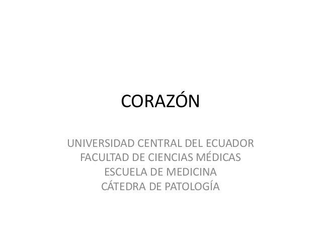 CORAZÓN  UNIVERSIDAD CENTRAL DEL ECUADOR  FACULTAD DE CIENCIAS MÉDICAS  ESCUELA DE MEDICINA  CÁTEDRA DE PATOLOGÍA