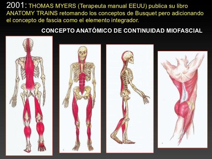 Famoso Las Vías Anatómicas Tom Myers Motivo - Anatomía de Las ...