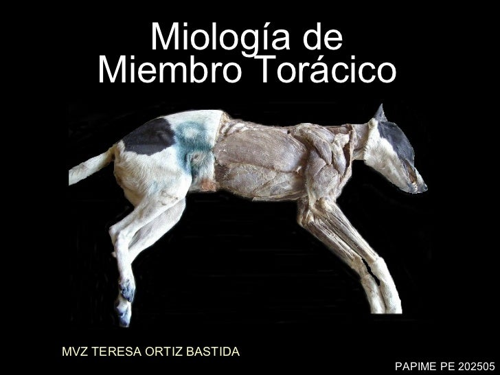 Miología de  Miembro Torácico  MVZ TERESA ORTIZ BASTIDA PAPIME PE 202505