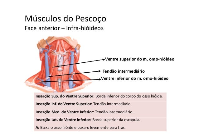 Miologia Cabe A E Pesco O
