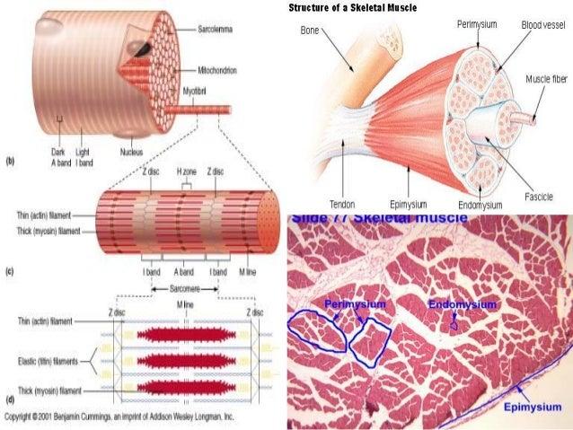 steroid myopathy emg